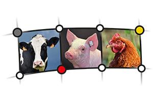 Netzwerk Tierwohl